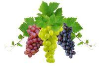 Vermenigvuldig Wine planten - hoe het moet