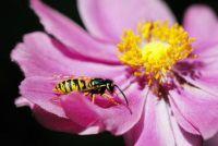 Wespensteek en calcium - zo beheert een EHBO-