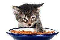 Kattenvoer zonder suiker?  - Om de juiste huisdier