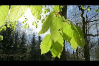 Boek soorten - te weten over de bomen