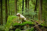 Zoek Games voor honden - Ideeën