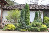 Verschillen tussen coniferen en loofbomen