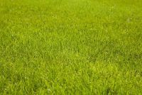 Roll grasmaaien - het moet je betalen