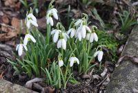 Wat te planten maart?