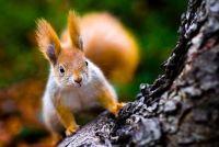 Maak eekhoorn kostuum zelf - Instructies