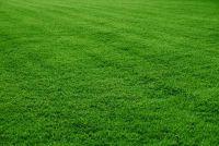 Paddestoelen in het gras - wat te doen?