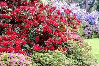 Red vaste planten - kleur in bloemen en bladeren