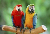 Papegaai kostuum - dus slagen kleurrijke make-up
