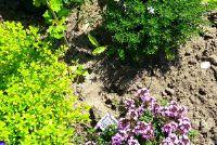 Bee vriendelijke tuin - je kunt doen
