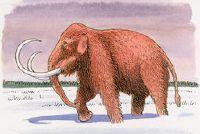 Mammoth: vorm van het lichaam - Mededelingen