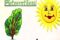 Fotosynthese - Verklaring voor Kinderen