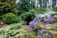 Shade vaste planten - zodat uw tuin greens