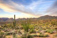 Woestijn ecosysteem