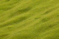 Maai hoog gras - Tips voor tuinieren