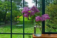 Geurige balkon planten - dus het balkon is een feest voor de zintuigen