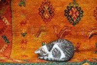 Kat niest vaak - mogelijke oorzaken gemakkelijk te verklaren