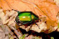 Insektenhotel - van plan om te bouwen met stenen en rieten