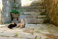 Katten en balkon - dus het is om te rusten, ervaring zone