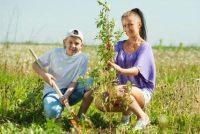 Plant een boom voor nieuwe baby - hoe het werkt