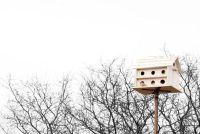 Het opzetten van een vogel huis - het moet je betalen
