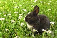 Geproduceerd konijn voedsel zelf - hoe het werkt