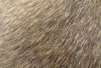 Guard haren van de hond - die wordt bedoeld met