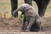 Langste dragen tijd: Zoogdieren - Overzicht