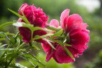 Flowers in september - dus je tuin bloeit in de late zomer