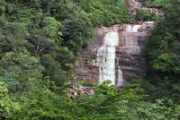 Tropisch regenwoud ecosysteem - het belang voor de wereldwijde klimaat duidelijk uitgelegd