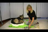 Kamille thee voor honden - zodat je ongemak te verlichten