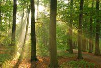 Het klimpark Bonn Hardtberg - een leuk dagje uit met het gezin slaagt dus