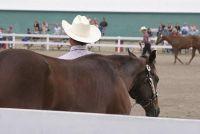 Chain halter voor paarden - dus een leiband wordt gebruikt