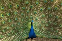 Schminken op carnaval - zo succesvol het hoofd van een vogel