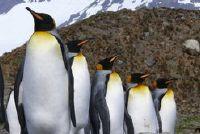 Voor de kinderen pinguïn kostuums tinker - je aankleden de kwekerij groep