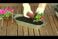 Bloembakken maken - tips en ideeën voor een zomer planten