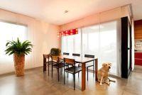 Hond gemarkeerd in het huis - dus je wennen aan het van hem