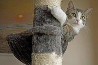 Build kat krabpaal zelf