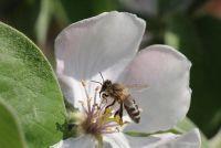 Bijensteek - verlichten jeuk