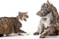Cats bijten - zodat u de wond goed te behandelen