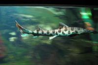 Sharks Sardinië - je moet weten