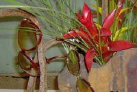Japanse bloemsierkunst - interessante informatie over Ikebana voor beginners