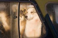 Ontdoen van de hond geur in de auto - hoe het werkt