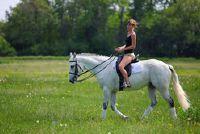 Verhuur van uw eigen paard - dat u actuarieel moet zich bewust zijn