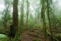 Regenwoud in Australië - Werelderfgoed als toeristische bestemming