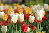 Grave planten in het voorjaar