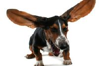 Rammelen in de hond - wat te doen?