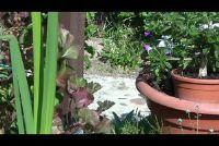 Het planten bloempot rechts