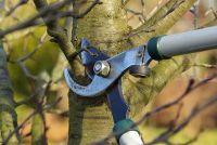 Besneden bomen - hoe de kosten laag te houden