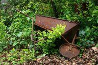 Met behulp van schors mulch in de tuin