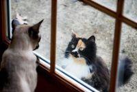 Kan een free-roaming kat een indoor kat?  - Advies